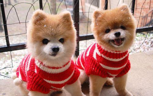 Christmas puppies | Nice Things